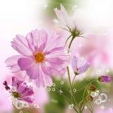 La belle fleur de source Photo stock