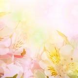 La belle fleur est dans les rayons de la lumière, blured Image libre de droits
