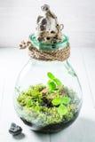 La belle forêt tropicale dans un pot, sauvent l'idée de la terre Photos stock