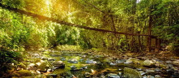 La belle forêt tropicale et la vue de paysage du long pont suspendu en soleil rayonne, Khao Sok National Park, Thaïlande Photographie stock libre de droits
