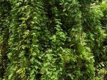 La belle fougère verte laisse le feuillage et les différentes feuilles sur le fond photographie stock libre de droits