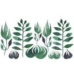 La belle herbe verte florale botanique lumineuse a isolé le croquis de main d'aquarelle Photo stock