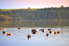 La belle nature de chute penche le lac Image libre de droits