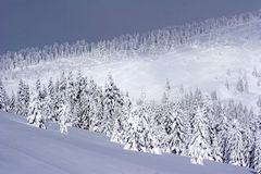 La belle neige a couvert des arbres de pin Image libre de droits