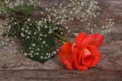 La belle orange s'est levée dans un cadre des fleurs de gypsophila Images stock