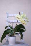 La belle orchidée au printemps Photo libre de droits