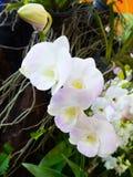 La belle orchidée de fleur molle de foyer fleurit dans le dos naturel de jardin Photo stock
