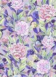 La belle pivoine fleurit avec des bourgeons et des feuilles dans les lignes droites avec les contours pourpres sur le fond clair  illustration libre de droits