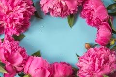 La belle pivoine rose fleurit comme cadre sur le bleu en pastel ivre Copiez l'espace et fermez-vous  Vue supérieure Configuration Photographie stock libre de droits