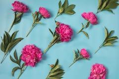 La belle pivoine rose fleurit sur le bleu en pastel ivre par la diagonale Copiez l'espace Vue supérieure Configuration plate Photographie stock