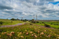 La belle réserve naturelle de Rietvlei près de Pretoria et de centurion a garni du macrocephalumroot pourpre de Campuloclinium de photographie stock