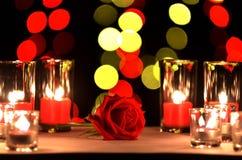 La belle rose de rouge un concept de l'amour et du jour du ` s de valentine a mis dessus Photo stock