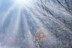 La belle scène dans les bois d'hiver avec le soleil rayonne Photographie stock libre de droits