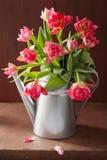 La belle tulipe rose fleurit le bouquet dans la boîte d'arrosage Photo libre de droits
