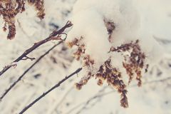 La belle usine d'hiver a enduit de la neige et de la glace blanches congelées Image stock