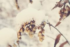 La belle usine d'hiver a enduit de la neige et de la glace blanches congelées Photos stock