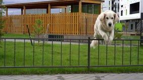 La belleza de la cámara lenta - un perro que salta sobre la cerca en una ciudad moderna metrajes
