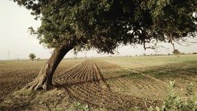 La belleza de campos Fotografía de archivo libre de regalías
