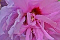 La belleza de la floración púrpura mediterránea de la flor imagen de archivo