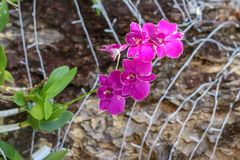 La belleza de flores naturales Imagen de archivo libre de regalías