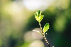 La belleza de la naturaleza Foto de archivo libre de regalías
