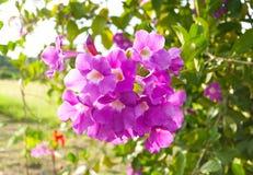La belleza de la orquídea rosada Foto de archivo libre de regalías