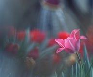 La belleza de la primavera Fotografía de archivo libre de regalías