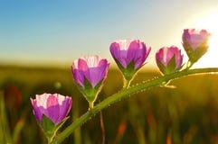 La belleza de la primavera Fotos de archivo libres de regalías