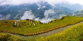 La belleza de la terraza 2# de Hani Fotografía de archivo libre de regalías