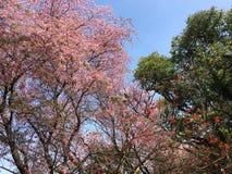La belleza de la naturaleza en el parque Fotografía de archivo libre de regalías
