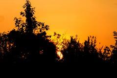 La belleza de la naturaleza de la puesta del sol tiene silueta del árbol en ciudad Fotografía de archivo