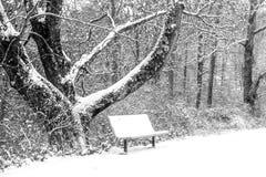La belleza de la primera nieve foto de archivo libre de regalías