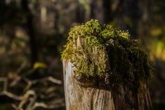La belleza del bosque tocón imagenes de archivo