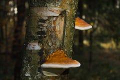 La belleza del bosque tocón Setas fotografía de archivo
