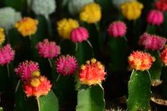 La belleza del cactus Imagenes de archivo