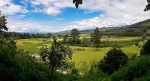 La belleza del distrito del arroz PUA Fotografía de archivo