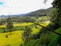 La belleza del distrito del arroz PUA Imagen de archivo