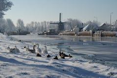La belleza del invierno fotografía de archivo