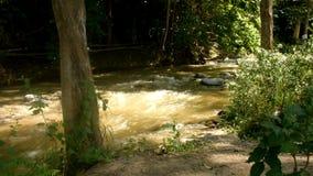La belleza del río de Paniki que fluye en la estación de lluvias almacen de video
