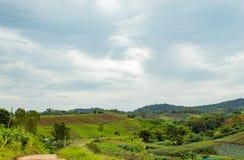 La belleza del remiendo vegetal en la montaña imagen de archivo