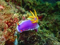 La belleza del salto subacuático del mundo en Borneo, Sabah fotos de archivo