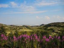 La belleza del verano septentrional en la tundra imagen de archivo
