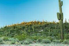 La belleza diversa del paisaje del desierto de Arizona Fotografía de archivo