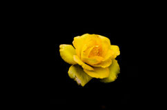 La bellezza dei fiori nel giardino Fotografie Stock Libere da Diritti
