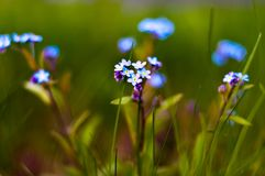 La bellezza dei wildflowers di fioritura Fotografia Stock Libera da Diritti