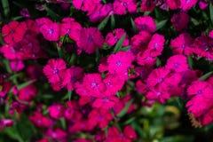La bellezza del fiore fotografia stock