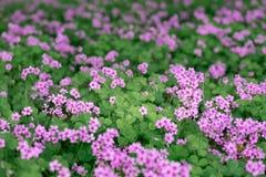 La bellezza del fiore fotografie stock