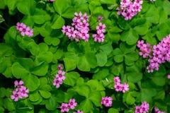 La bellezza del fiore fotografie stock libere da diritti