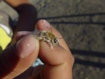 La bellezza dell'ape del miele fotografie stock libere da diritti