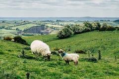 La bellezza dell'Irlanda Fotografie Stock